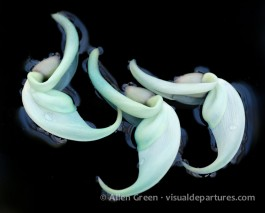 Jade vine flowers in the reflecting pond